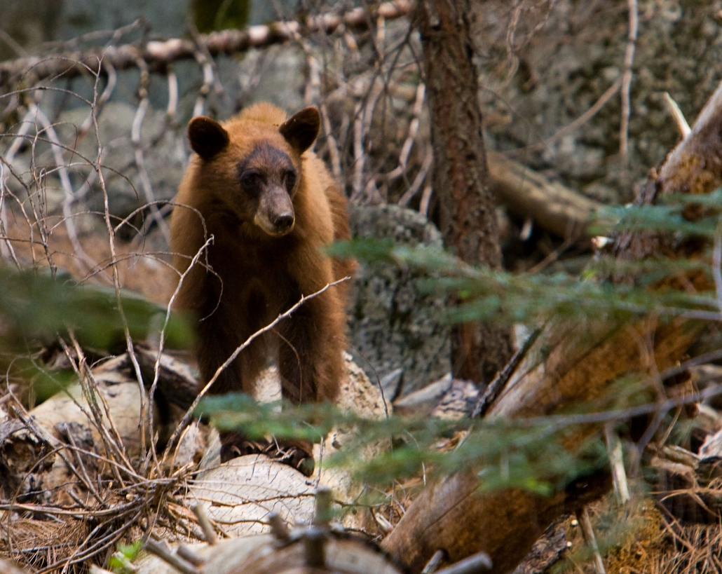 Bear on Luxury Private Yosemite Tour
