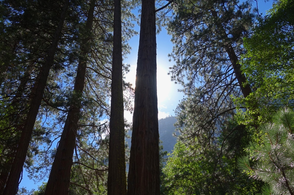 Luxury Private Yosemite One Day Tour