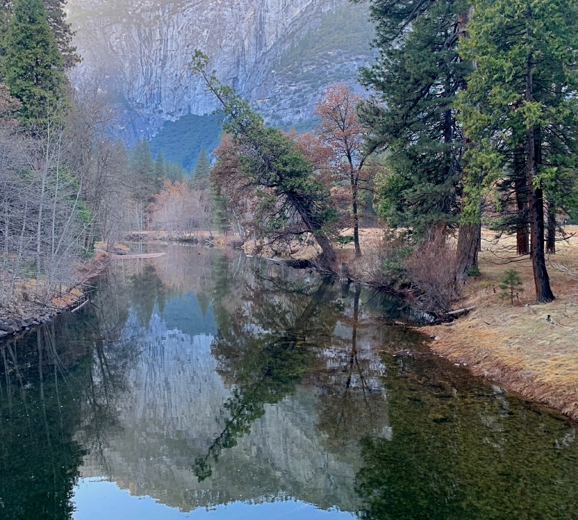Merced River Tree Reflection