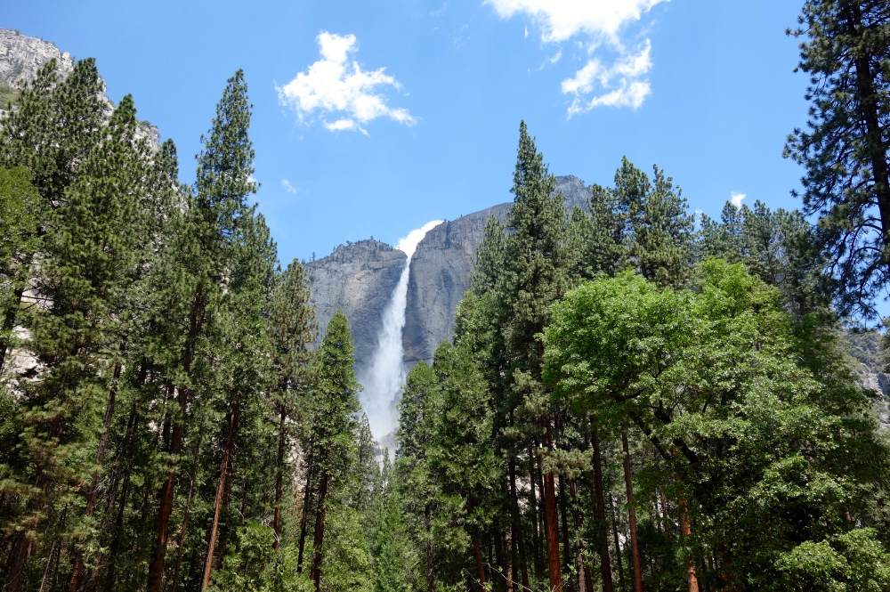 Yosemite Falls Private Tour