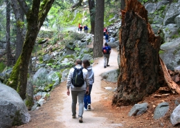 Yosemite Luxury Hike
