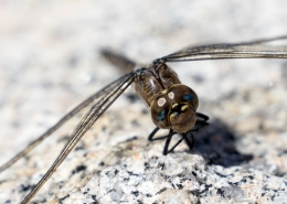 Private Yosemite Tour Dragonfly